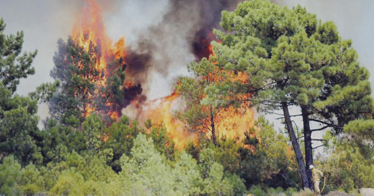 Calvaria e Juncal fora das zonas de maior risco de incêndio
