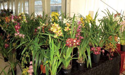 Mudança de local atrai mais público Feira das Sementes e Plantas