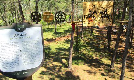 Arborismo e História em união em São Jorge