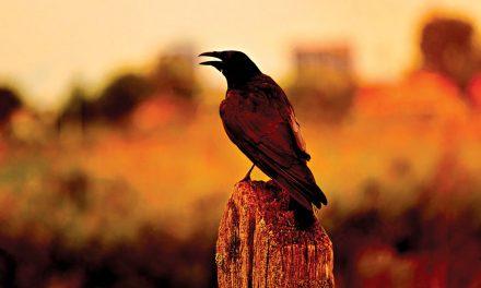 Plataforma online junta informação sobre património natural e biológico