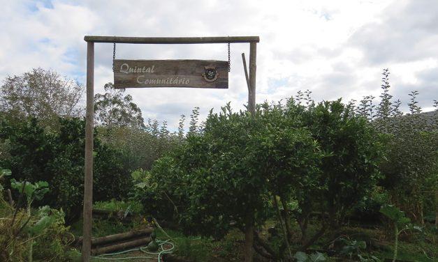 Quintal Comunitário: um jardim onde se cultiva saúde
