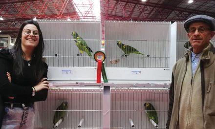 Papagaios de Fernando Vieira premiados em Portugal e Espanha