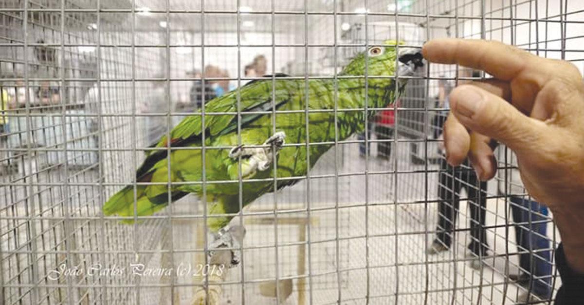 Paixão pelas aves já os levou ao topo