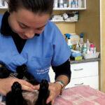Carolina Carvalho é enfermeira veterinária