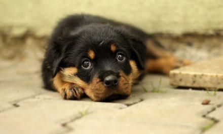 Clínica Veterinária lança campanha para ajudar cães desprotegidos