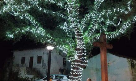 Carvalho centenário iluminado na Calvaria de Cima