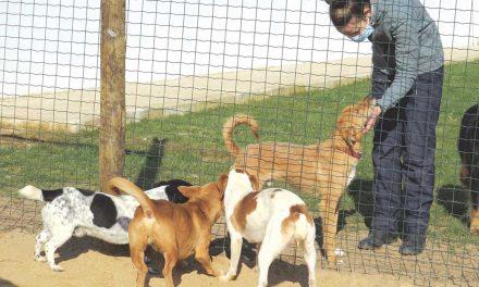 Falta de fiscalização e de civismo contribui para o elevado número de animais abandonados