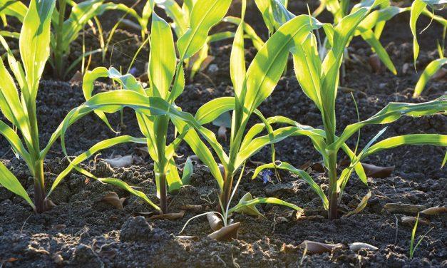 Assembleia aprova moção a favor da agricultura local