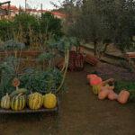 9.ª Festa das Abóboras no Quintal Comunitário de Alcaria